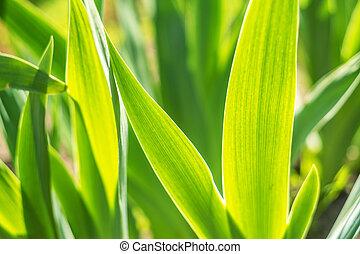Tropical plant leaf texture