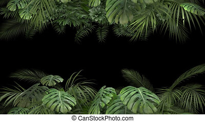 Tropical plant on an alpha channel HD