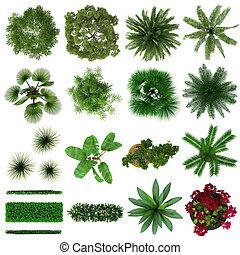 tropical, plantas, colección