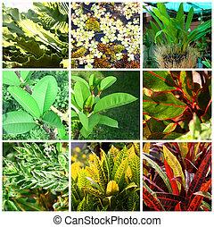 tropical, plantas, y, flores