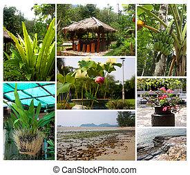 tropical, plantas, y, paisajes