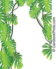 tropical plante, baggrund