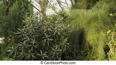 Tropical plants and tree in the botanic garden. Botanic greenhouse. Interior of glasshouse. Tropical background.