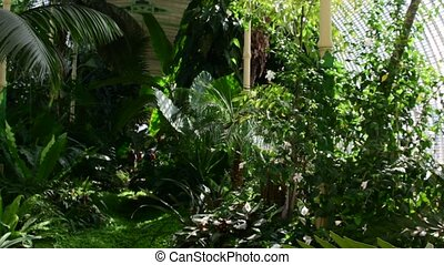 Tropical plants and tree in the botanic garden. Botanic...