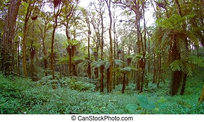 """""""Tropical Plants and Trees in a Forested Wilderness Area, with Sound"""""""