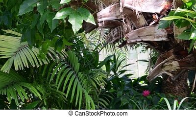 Tropical plants and trees in the botanic garden. Botanic...