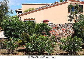 Tropical plants in a garden