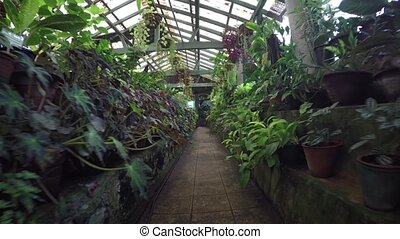Tropical Plants in a Greenhouse in Sri Lanka. Video 1080p...
