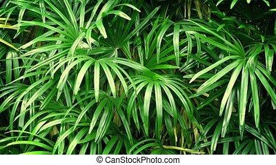 Tropical Plants In Breeze