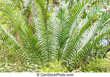 tropical plants in the garden