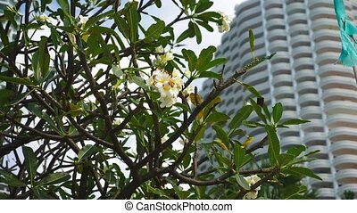 tropical plants on the background of a skyscraper. urban tropical landscape