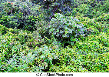 Tropical Plants Puerto Rico