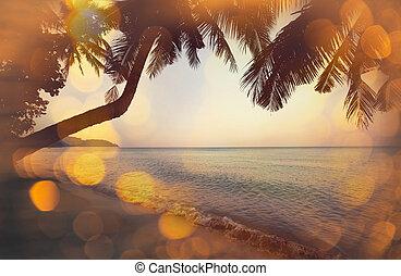tropical, playa