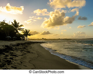 tropical, playa, ocaso