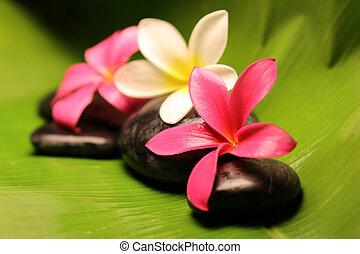 Tropical plumeria flowers on stone - Three tropical plumeria...