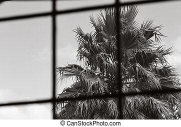 Tropical Prison