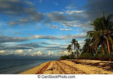 Tropical pristine island with coastline, beach and palm...