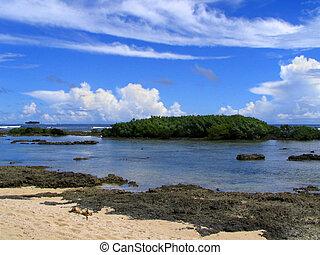 Tropical pristine ocean beach