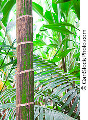 tropical pristine rain forest background