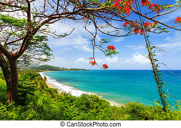 Tropical Puerto Rico - Beautiful tropical summer view of...