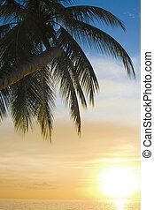 tropical, puesta de sol