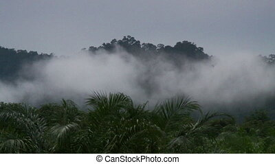Tropical rain forest - Green forest in misty morning....