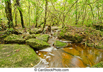 tropical rain forest in Thailand