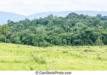 Tropical rain forest in Thailand.