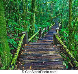 tropical rain forest path asia thailand