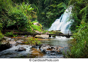 Tropical rain forest with waterfal