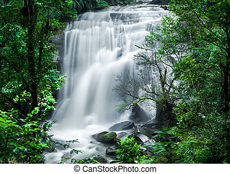 Tropical rain forest with waterfall