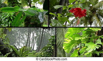 tropical rain in forest