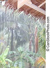 Tropical rain in jungle - Tropical rain shower gushing down ...