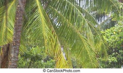 Tropical Rain through Palm Fronds at an Island Beach Resort...