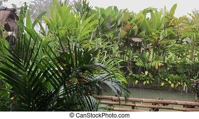 Tropical rain, view from villa. Ubud. Bali island,...