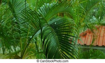 Tropical Rain2