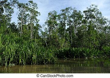 Tropical rainforest and river - Lush green rainforest along...