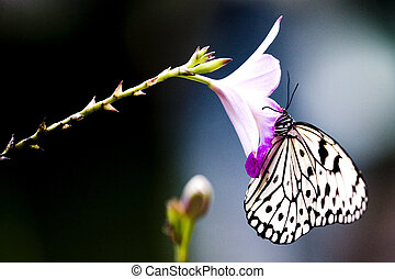 Tropical Rainforest Butterfly - Butterfly found at the...