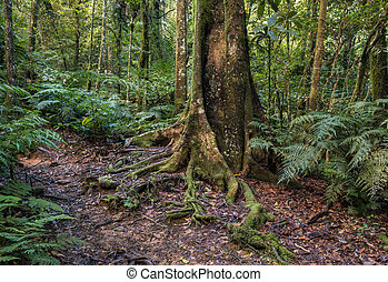 tropical rainforest in New Caledonia with ferns and moss ...