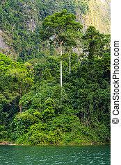 Tropical rainforest lakeside Cheo lan in Thailand