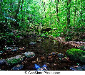 Tropical Rainforest Landscape, Asia Thailand