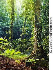 Tropical Rainforest. - Morning sunbeam shine thru the green ...