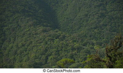 Tropical Rainforest Mountain, Costa Rica - Medium low-angle ...