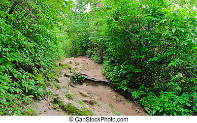 Tropical rainforest - Pathway in tropical rainforest