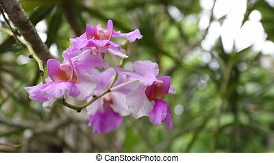 Tropical Rainforest Pink Canopy Flower, Costa Rica -...