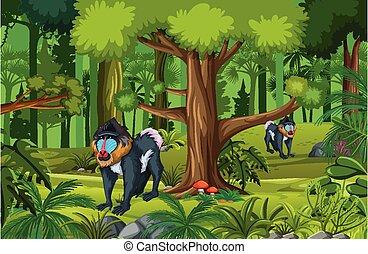 Tropical rainforest scene with mandrill family illustration