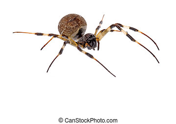 Tropical Rainforest Spider - Isolated macro image of a ...