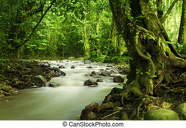 tropical, rainforest, y, río
