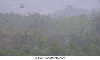 Tropical rainstorm in the jungle against the backdrop of a...