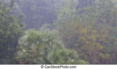 Tropical Rainstorm in the Jungle against the backdrop of a Green Forest with a Palm Tree